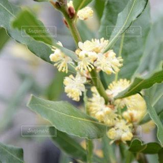 花の写真・画像素材[110752]