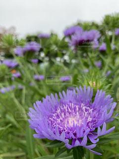 花の写真・画像素材[2569583]