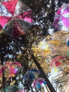 傘の写真・画像素材[2597861]