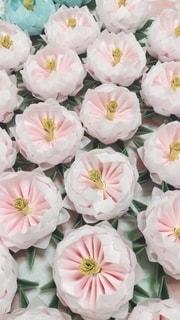 花の写真・画像素材[2619528]