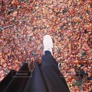 落ち葉の絨毯の写真・画像素材[2613662]