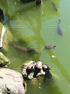 池の写真・画像素材[99885]