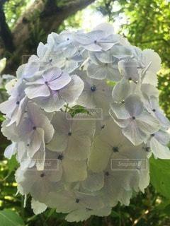 花の写真・画像素材[101995]