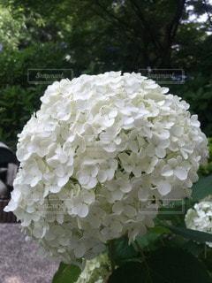 花の写真・画像素材[101998]