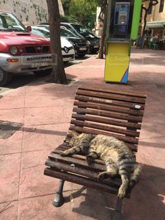 猫の写真・画像素材[2591467]