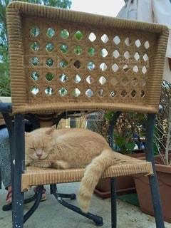 猫の写真・画像素材[2618266]