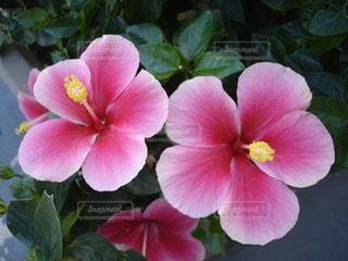 花の写真・画像素材[2641486]