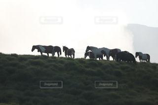 早朝、草千里の自由な馬たちの写真・画像素材[3393379]