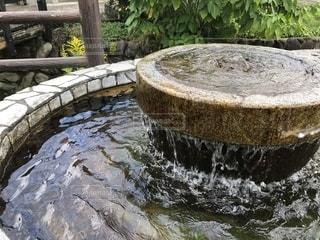 湧き水の写真・画像素材[2583190]