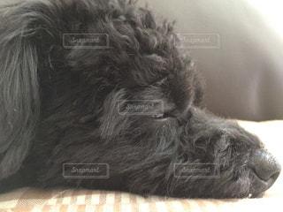 犬の写真・画像素材[175784]