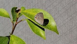 緑の植物の写真・画像素材[2556574]
