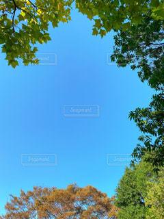 日常の空の写真・画像素材[2555265]