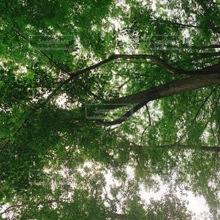 木のクローズアップの写真・画像素材[2556348]