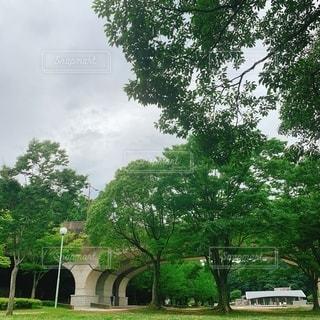 公園の大きな木の写真・画像素材[2556355]