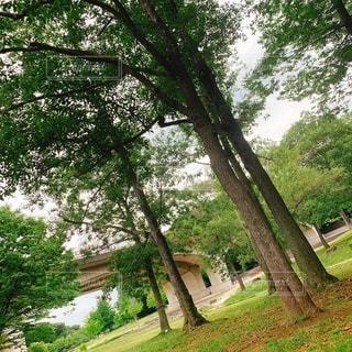 樹木の写真・画像素材[2556977]