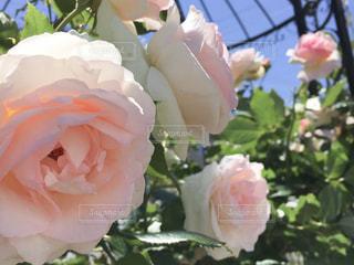 花の写真・画像素材[2595088]