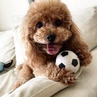 ベッドに座っている犬の写真・画像素材[2556347]