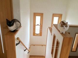 猫の写真・画像素材[99703]