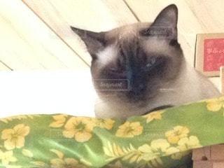 猫の写真・画像素材[99838]