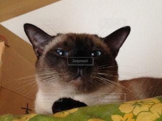 猫の写真・画像素材[99839]