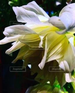 花の写真・画像素材[2611828]