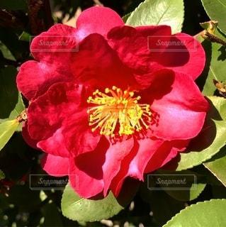 花の写真・画像素材[2618627]