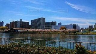 都会と桜の写真・画像素材[2598524]