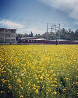 菜の花畑とレトロ電車の写真・画像素材[2558168]
