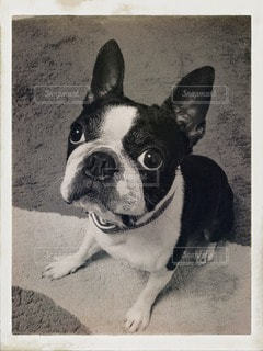 犬の写真・画像素材[106707]