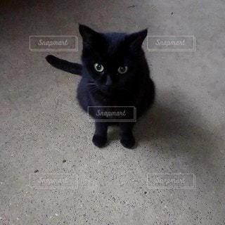 黒猫の写真・画像素材[2581363]