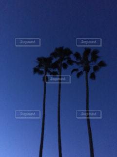 Californiaの写真・画像素材[2559547]