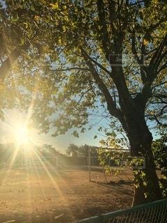サッカーゴールのあるグラウンドから見える輝く朝日の風景の写真・画像素材[2617597]