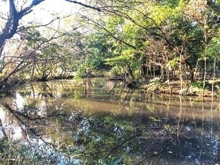 木々や緑の葉が水面に映る自然風景の写真・画像素材[2737755]