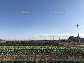 青空と白い雲と畑の緑が広がる電線の連なる田舎の街並みの風景の写真・画像素材[2829199]