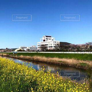 菜の花のある景色の写真・画像素材[3090259]