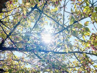 日の光を浴びての写真・画像素材[3097912]