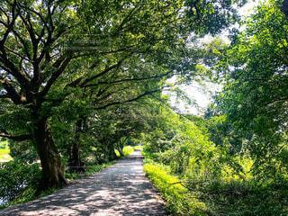 夏の日差しを浴びた草木から溢れる木漏れ日の道がある風景の写真・画像素材[3578060]