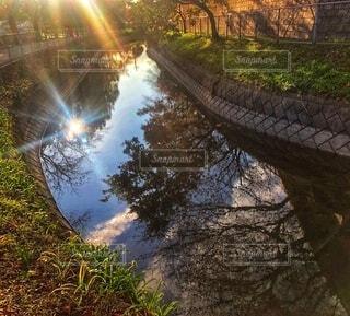 西日に照らされた川に映る太陽と木々のシルエットがある川辺の風景の写真・画像素材[3852380]