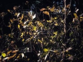 暗闇の中で生い茂る草木と日の光に照らされた葉っぱのある風景の写真・画像素材[3949030]