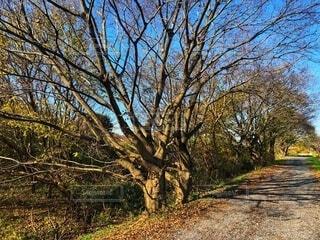 冬の青空と砂利道の一本道に沿って生い茂る草木のがある風景の写真・画像素材[3952461]