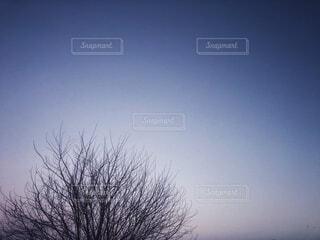 薄暗い夜の空と枯れ木のシルエットがある冬の風景の写真・画像素材[4050507]