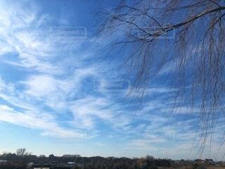 青空と白い雲と枯れ木の枝が垂れ下がる冬の田舎の景色の写真・画像素材[4091131]