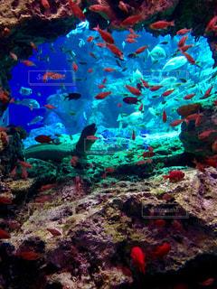水の中の魚の群れの写真・画像素材[1408369]