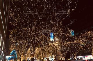 冬の写真・画像素材[2619766]