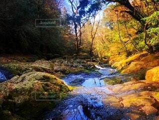 自然の写真・画像素材[2563171]