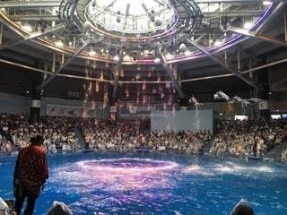 イルカの写真・画像素材[2566325]