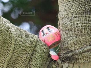 お寺の中で出会ったミニダルマの写真・画像素材[2594029]