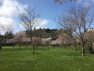 桜の写真・画像素材[2563583]