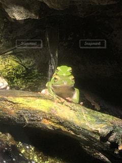カエルの親子の写真・画像素材[2564701]