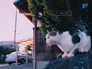 猫 - No.139762